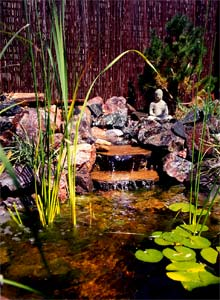 Contact us for Koi pool thornton