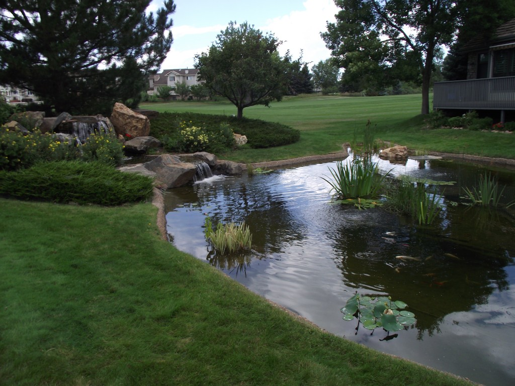 The gallery for large backyard ponds for Garden pond pictures designs