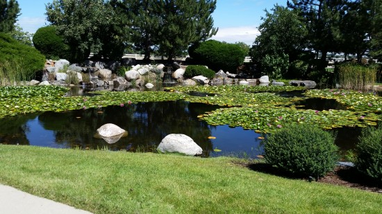 Commercial projects are big, but we handle those as well.  All aquatic plants seen were earlier established by WOTR, and are continually maintained by us.  Year in and year out.