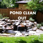 pond clean out 2